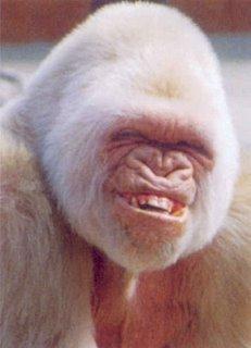 monkeybmp.jpg