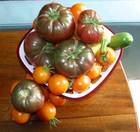 IMG_3829-tomatoes-top-595x396